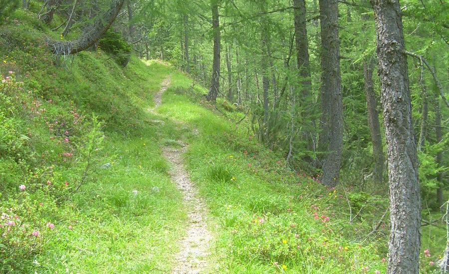 Escursioni a piedi semplici e sicure
